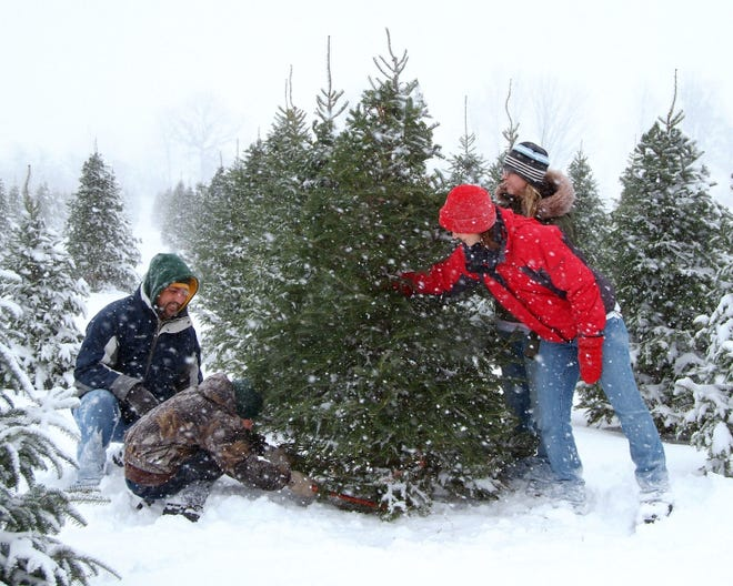 Michigan has nearly 100 choose-and-cut Christmas tree farms spread throughout the state. Cutting your own tree is good for the environment, good for the Michigan economy and makes for a fun family outing.