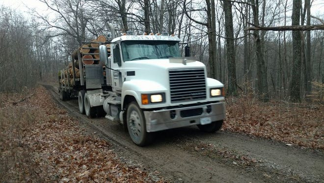 Logging has officially begun in the Yellowwood Backcountry Area.