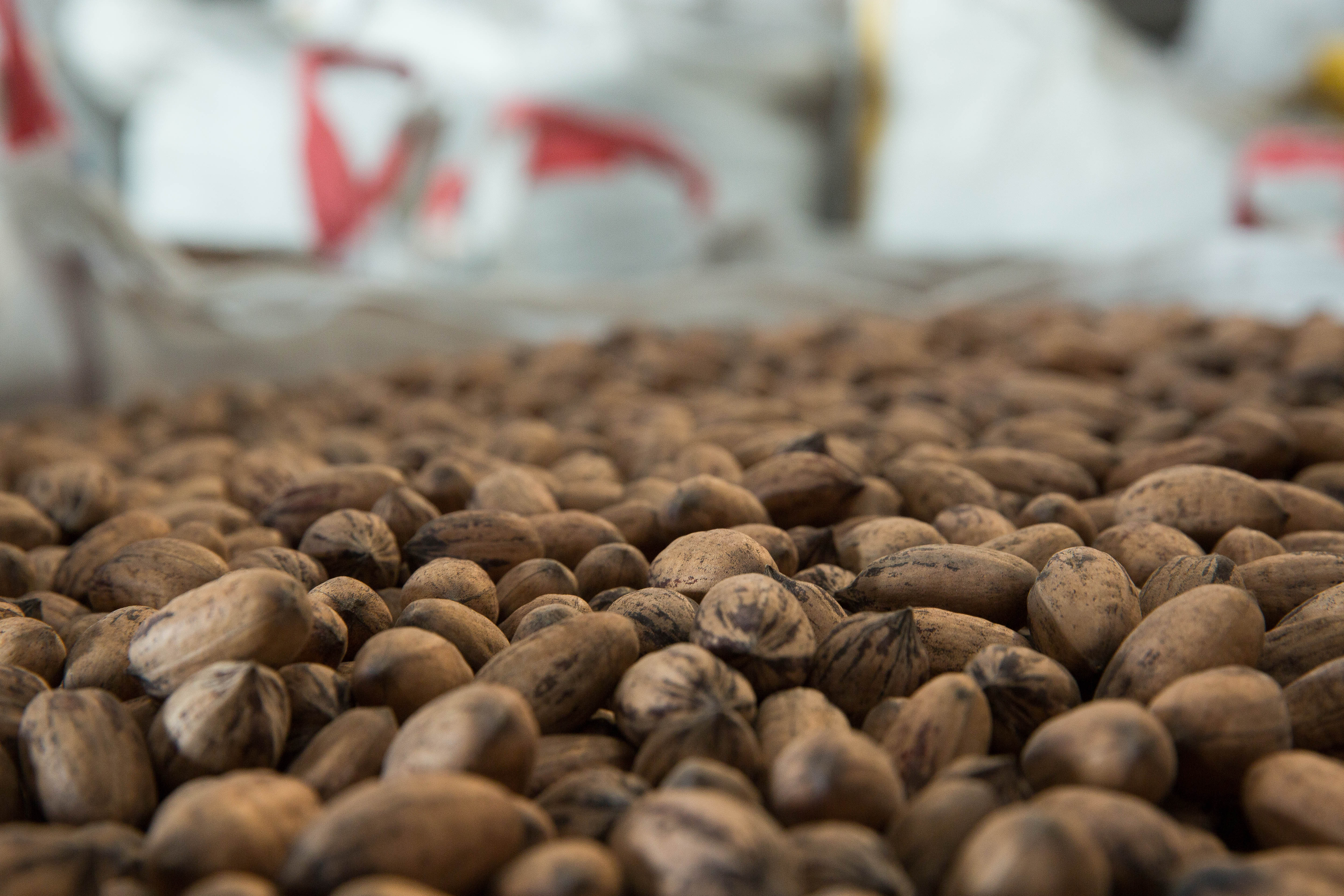 Pecan growers debut new nut-branding campaign | Las Cruces Sun