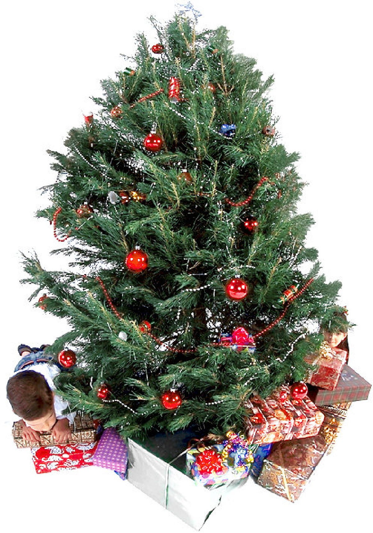Christmas Tree Recycle Design.Got A Live Christmas Tree You Can Recycle