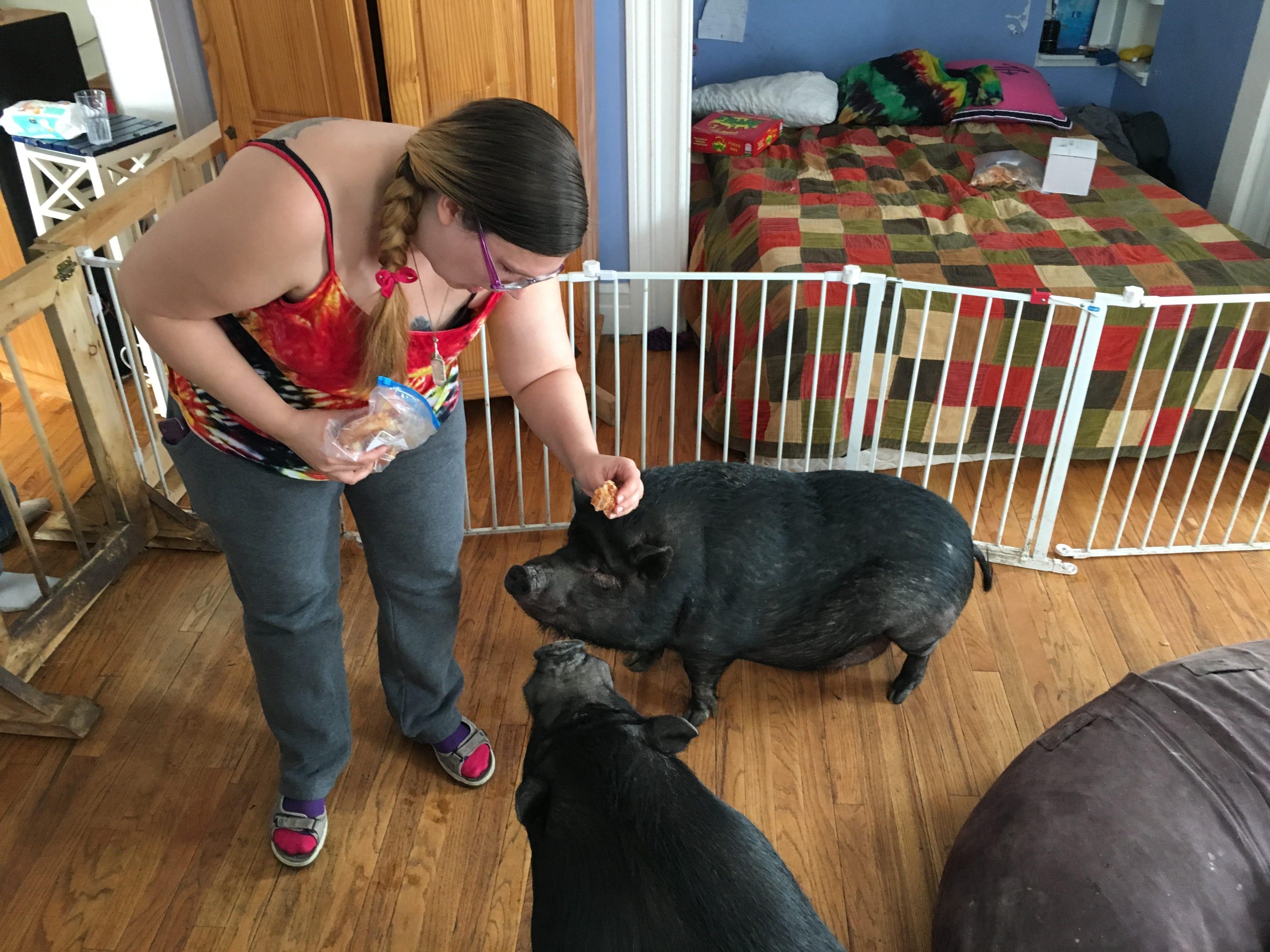 Judge orders Ypsilanti family to remove 3 potbellied pigs   Detroit Free Press