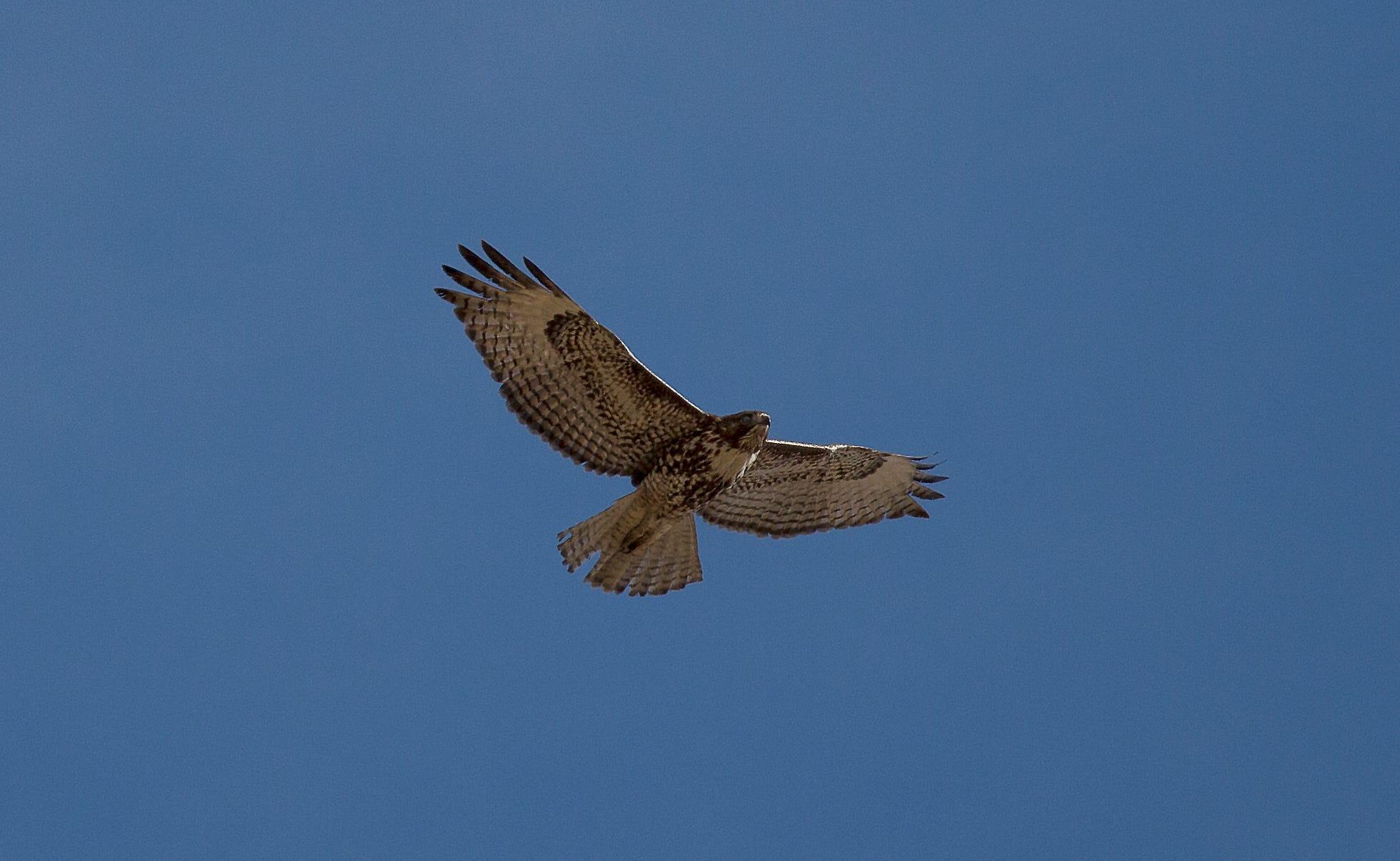 falcon leven nv