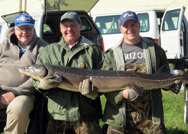 Ryan Koenigs, right, Wisconsin DNR's top sturgeon expert, has been charged with obstructing a warden in an investigation into the illegal sale of lake sturgeon eggs for caviar.
