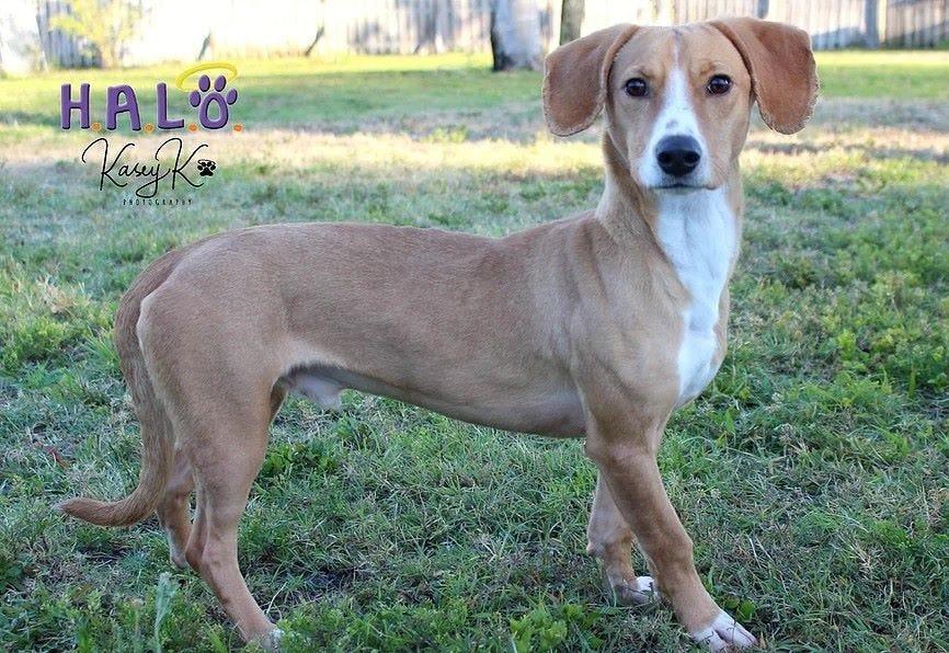 Brown Dog Hosiery Size 10-13 3 Pair Combo Pack Ducks Quails /& Mahi-Mahi