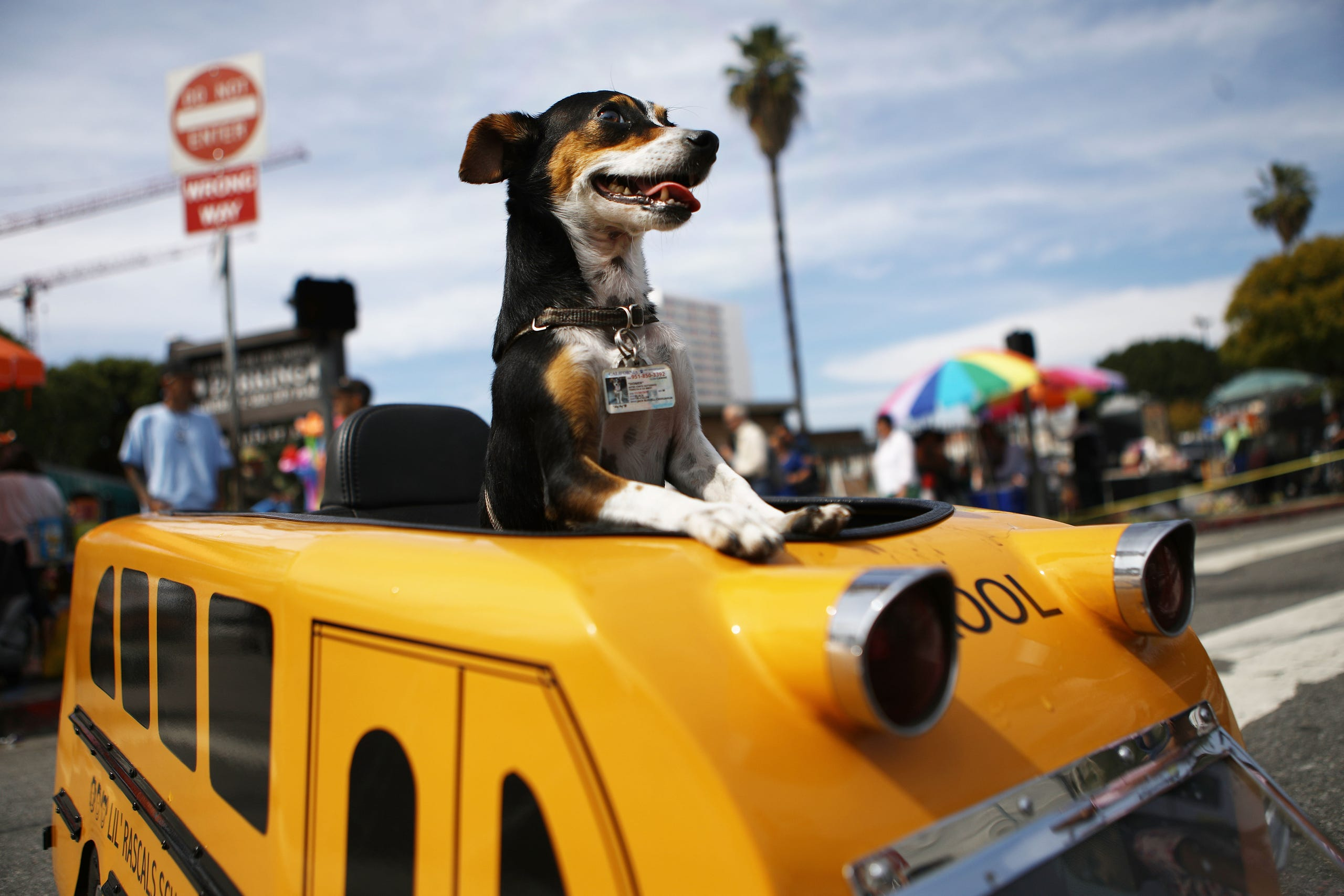 Annual Blessing of the Animals in Los Angeles