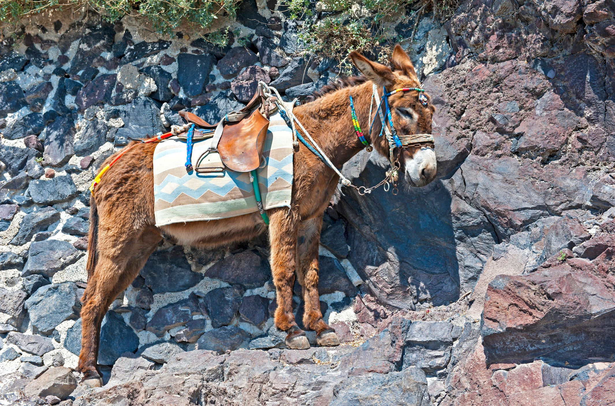 In Santorini, tourists who weigh more than 220 pounds are now banned from riding donkeys