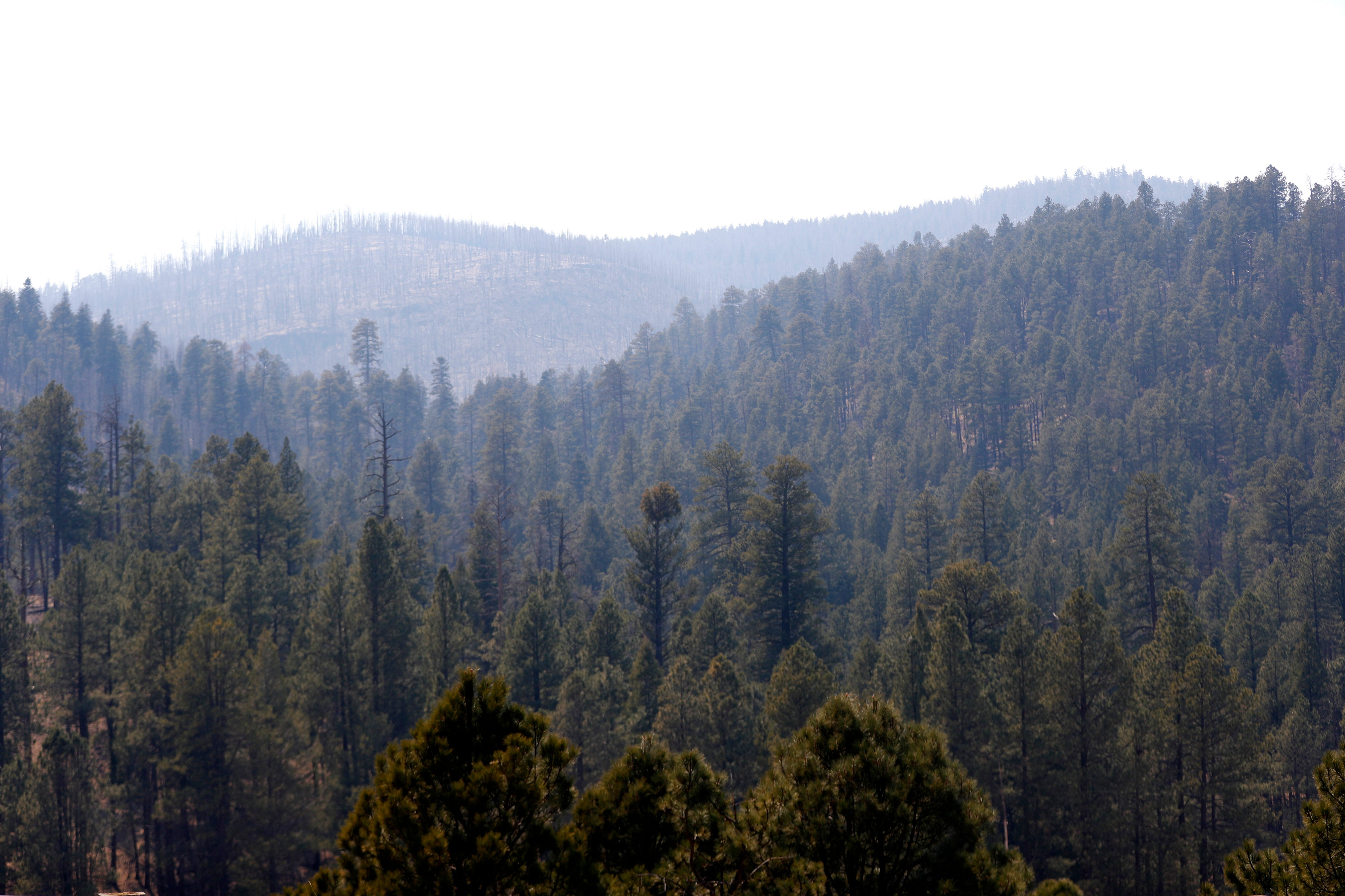 Rattlesnake Fire grows to more than 11,000 acres in eastern Arizona | Arizona Central