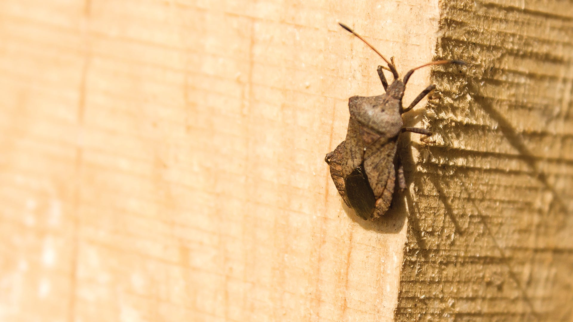 Stink Bugs Ticks Flies And More 10 Pests In Central Pa