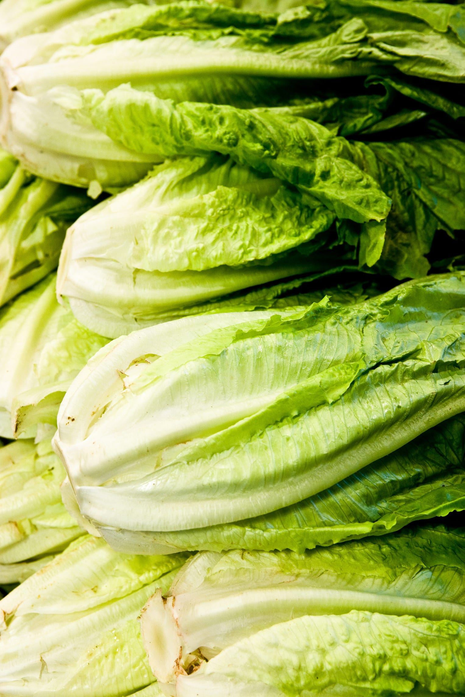 CDC expands E. coli warning on tainted Yuma lettuce | Arizona Central