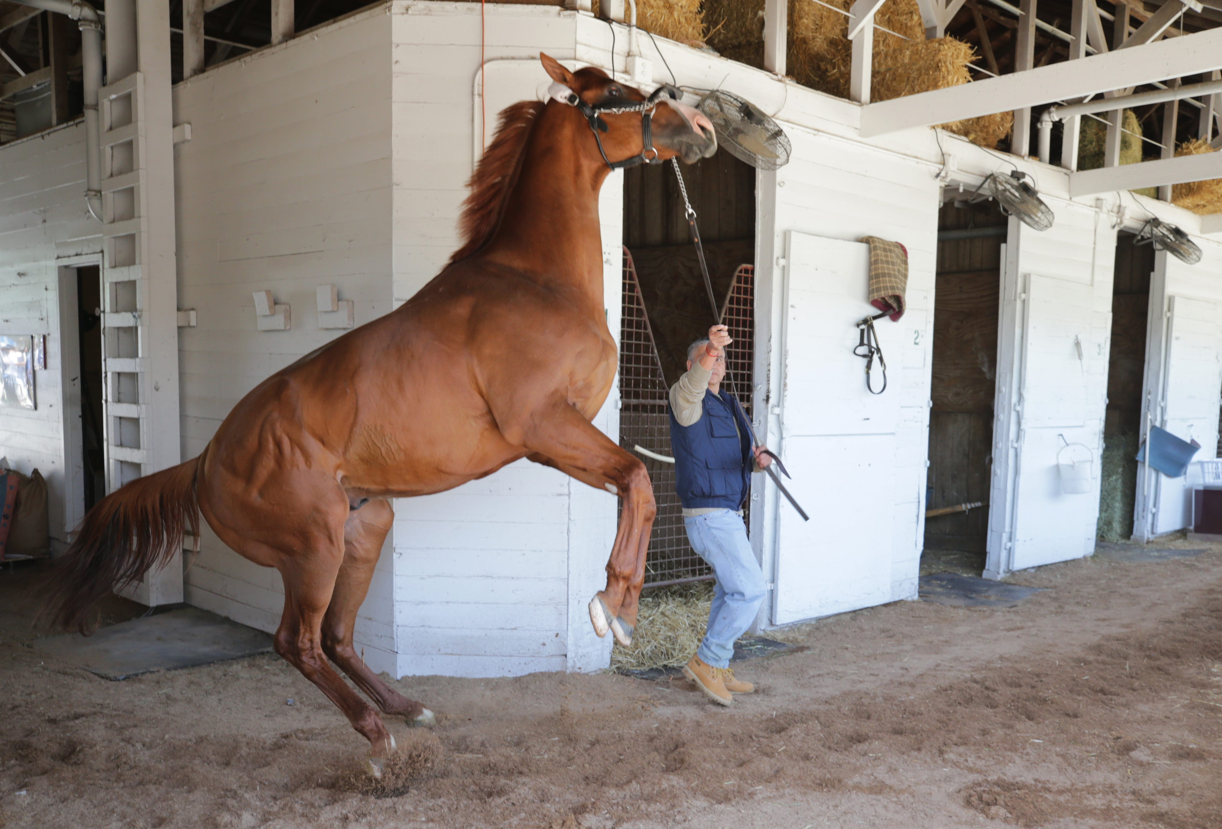 fc986bdd471e0 http://www.courier-journal.com/picture-gallery/sports/horses/triple ...