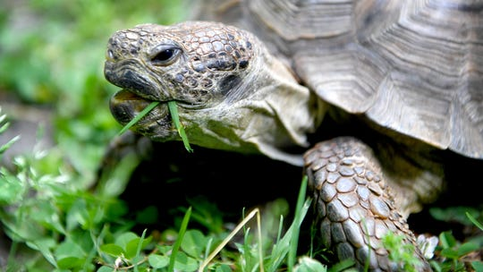 Tommy the tortoise finds new forever home after national search