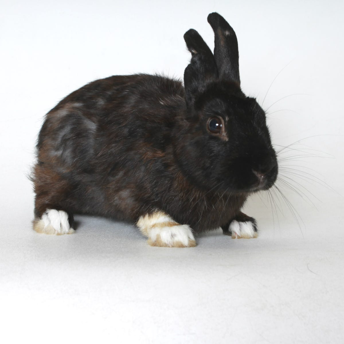Rescues bring more choices than ever for bunny adoptions at HSTC