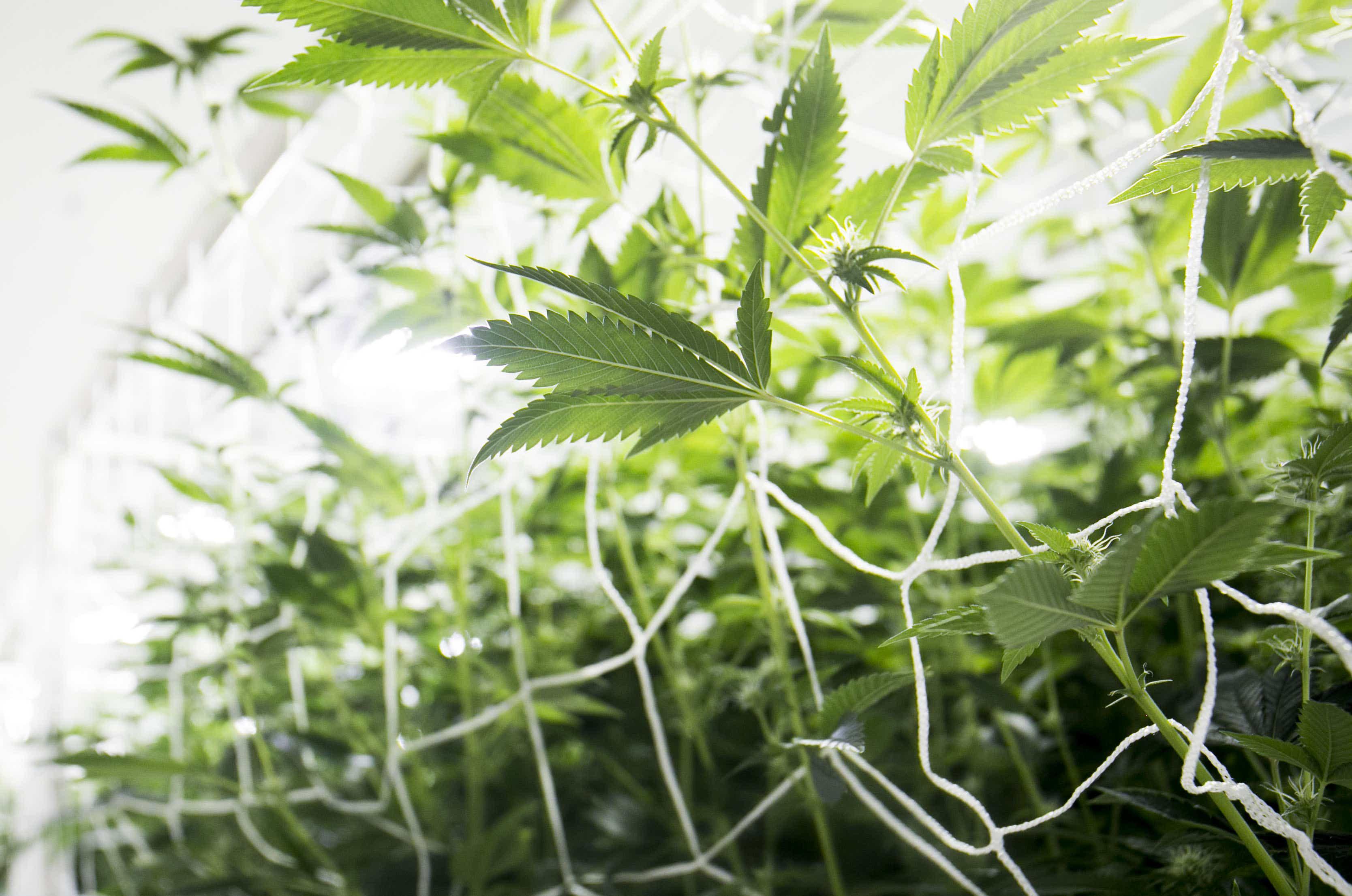 Phoenix neighbors sue volunteer city board over medical marijuana dispensary