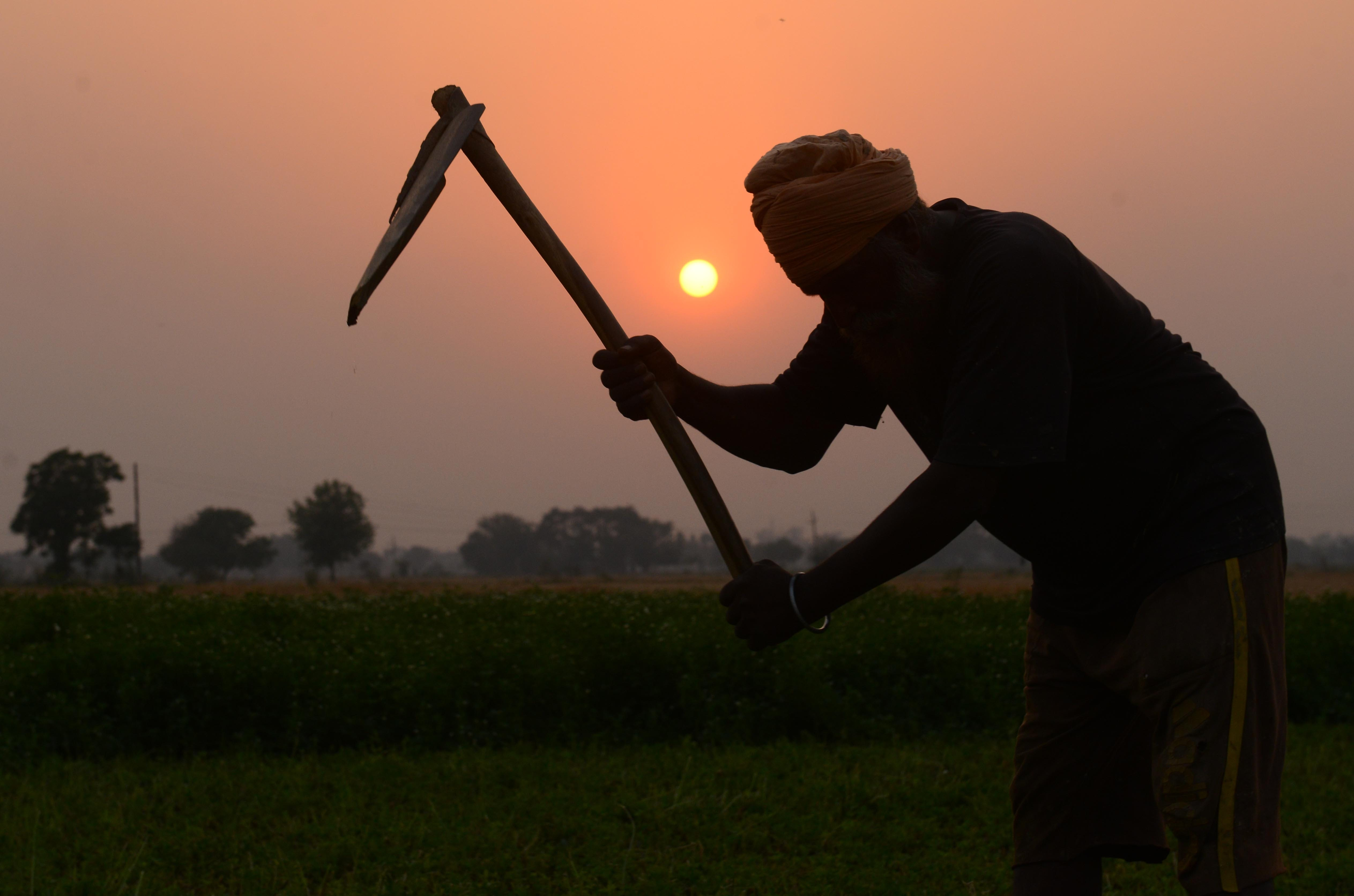 A farmer works in a field on the outskirts of Amritsar, India.