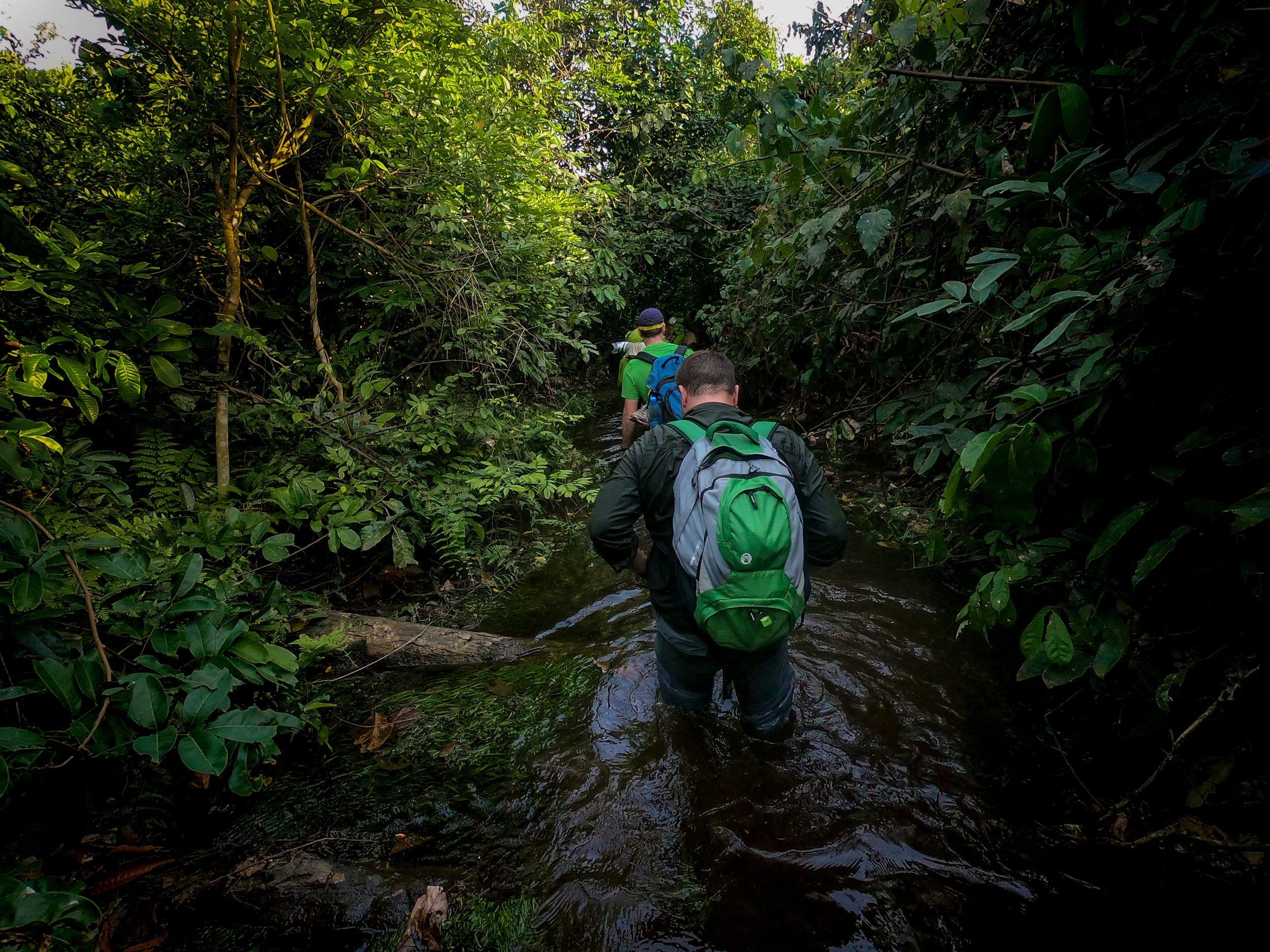 Ron Evans follows Dave Morgan through a swamp on the hike to the Goualougo Triangle. After hiking for six hours, the 30-minute walk in the water was a refreshing relief to the heat and humidity.