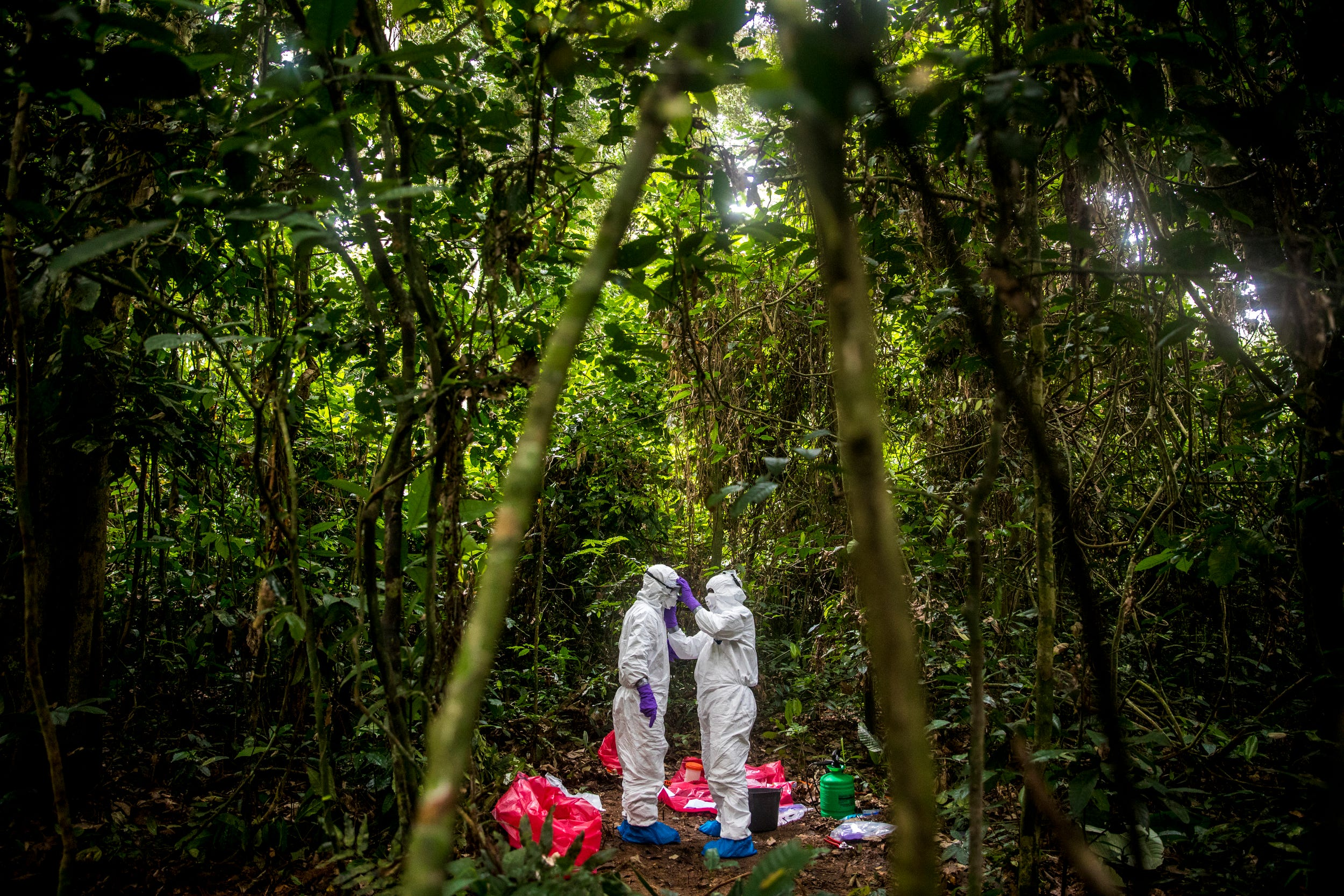 Severin Kialiema, a research assistant, helps cover the face of Juan Ortega, a researcher and the site manager of the Goualougo Triangle Ape Project, before Juan collects samples from Etecko's body. The two men must follow health precautions by completely covering their body.
