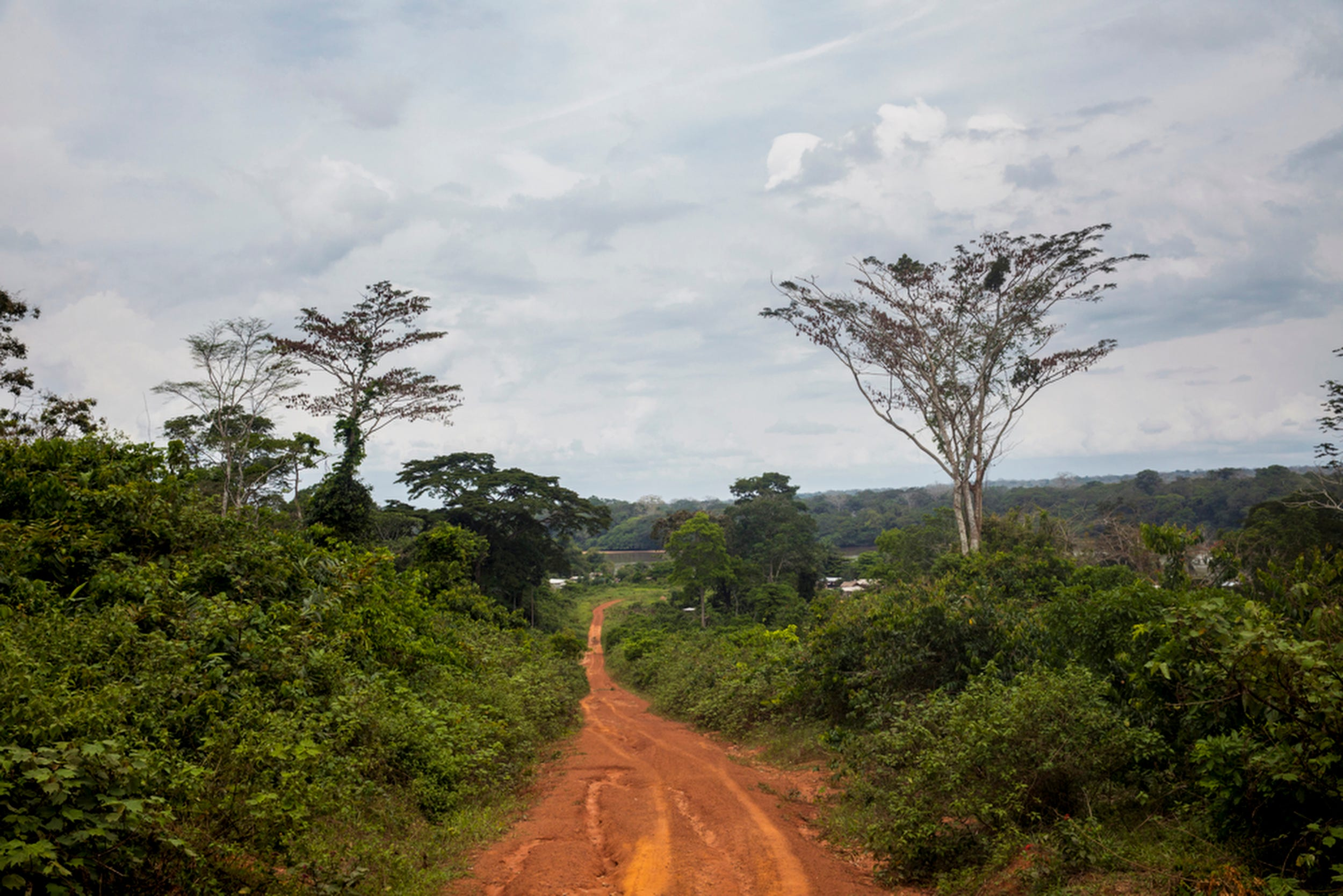 """After a week in the forest, the group leaves to return to the Nouabale-Ndoki National Park's headquarters in Bomassa. """"The heartening part is that this has only been protected for less than 25 years,"""" said Thane Maynard. """"It was through the work of the Wildlife Conservation Society, Dr. Mike Fay and his mega transect and hundreds of other people that worked for the government of Congo to say this is important."""""""
