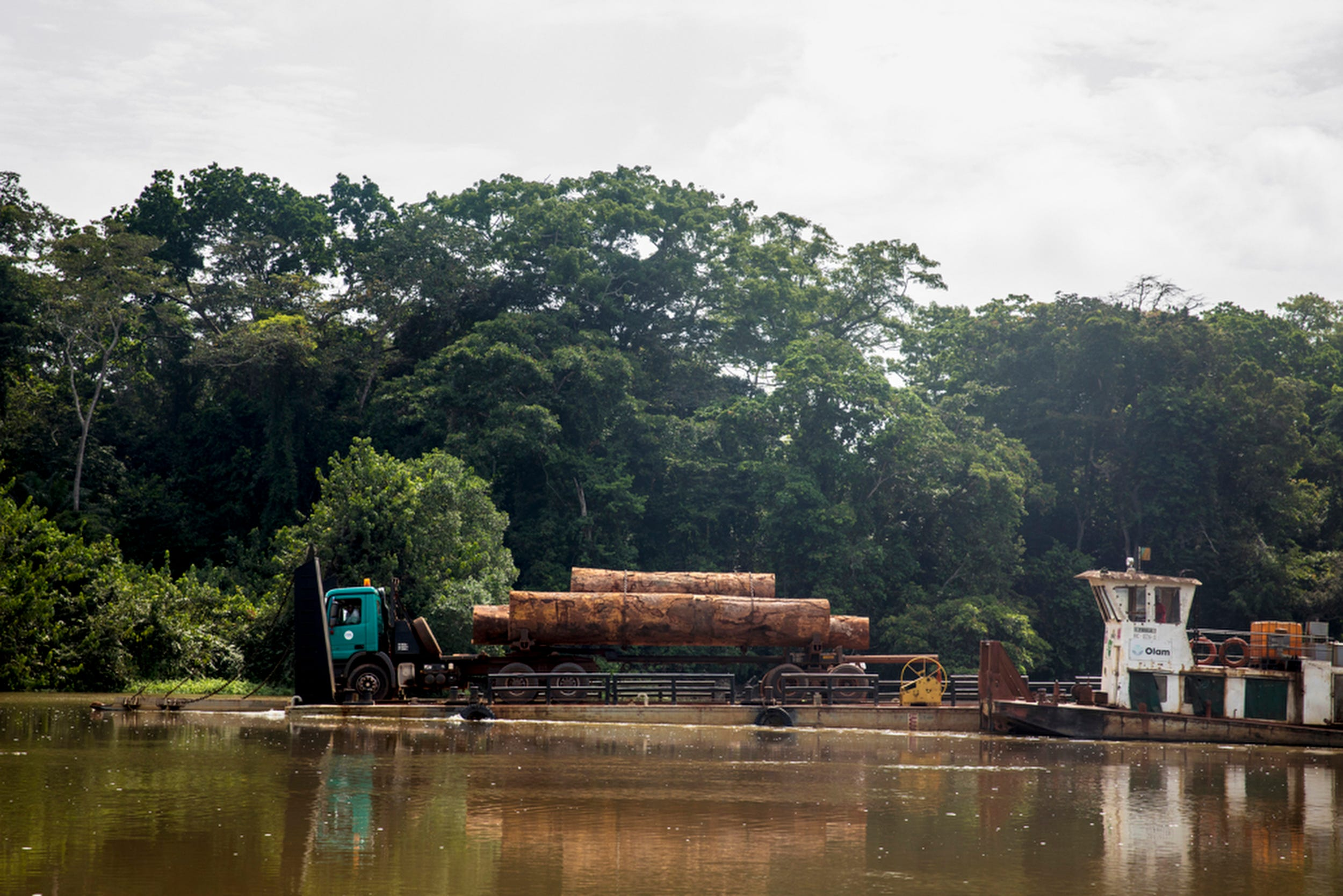 A logging truck hauling felled trees is transported across the Sangha river on a barge. Some of the trees logging companies are cutting down can be up to 900 years old.