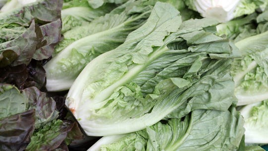 Romaine Lettuce Recall Growers Adopt New Safety Labels After E