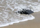 These 5 oceanfront Jersey Shore beaches failed fecal bacteria testing most often between 2016 and 2018.
