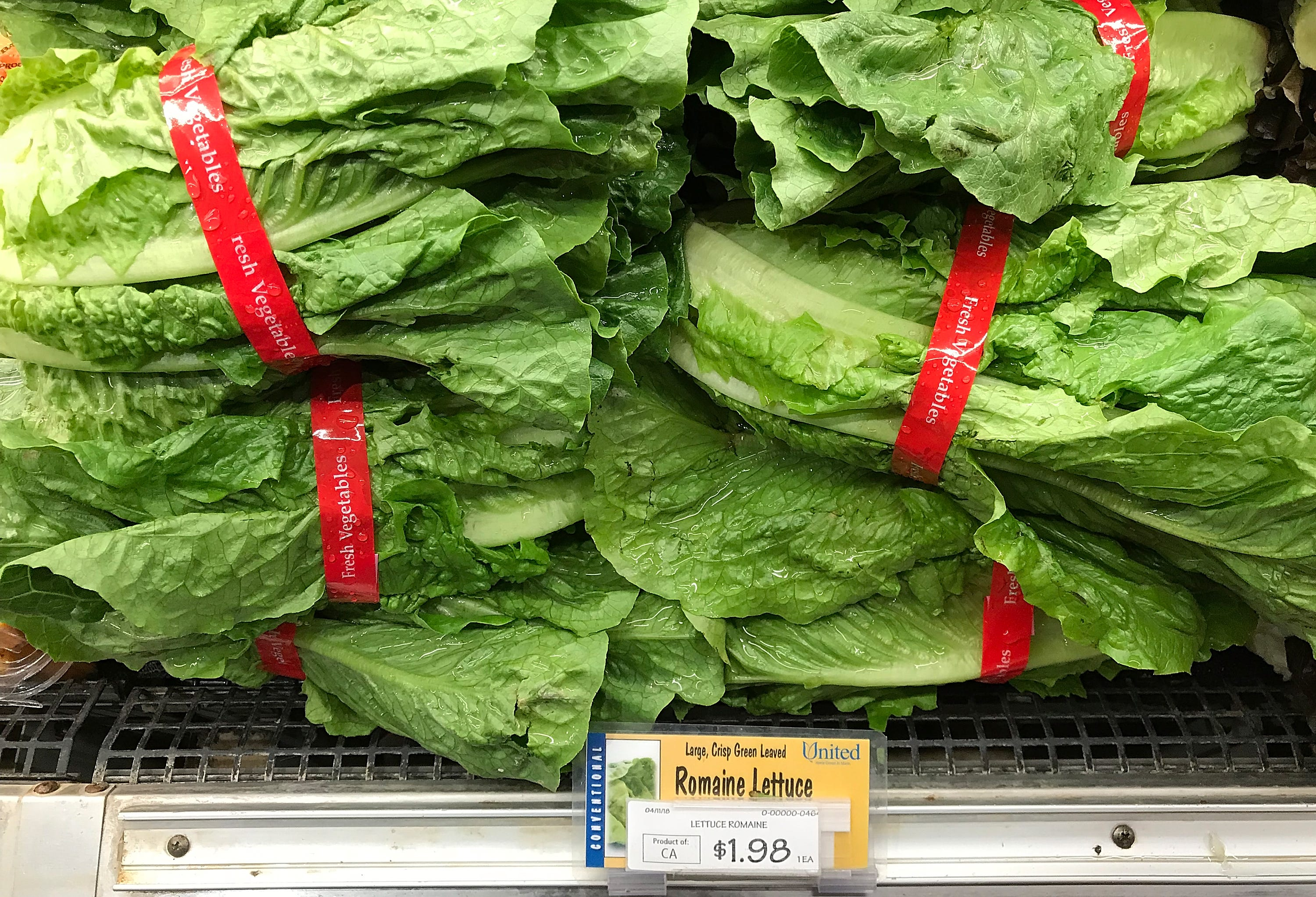 Large cattle farm may have caused romaine lettuce E. coli outbreak