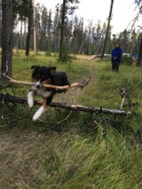 Get Out! Nor Cal Facebook group shares photos of their pets playing outdoors