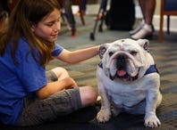 Iowa boy becomes Twitter famous for petting dogs