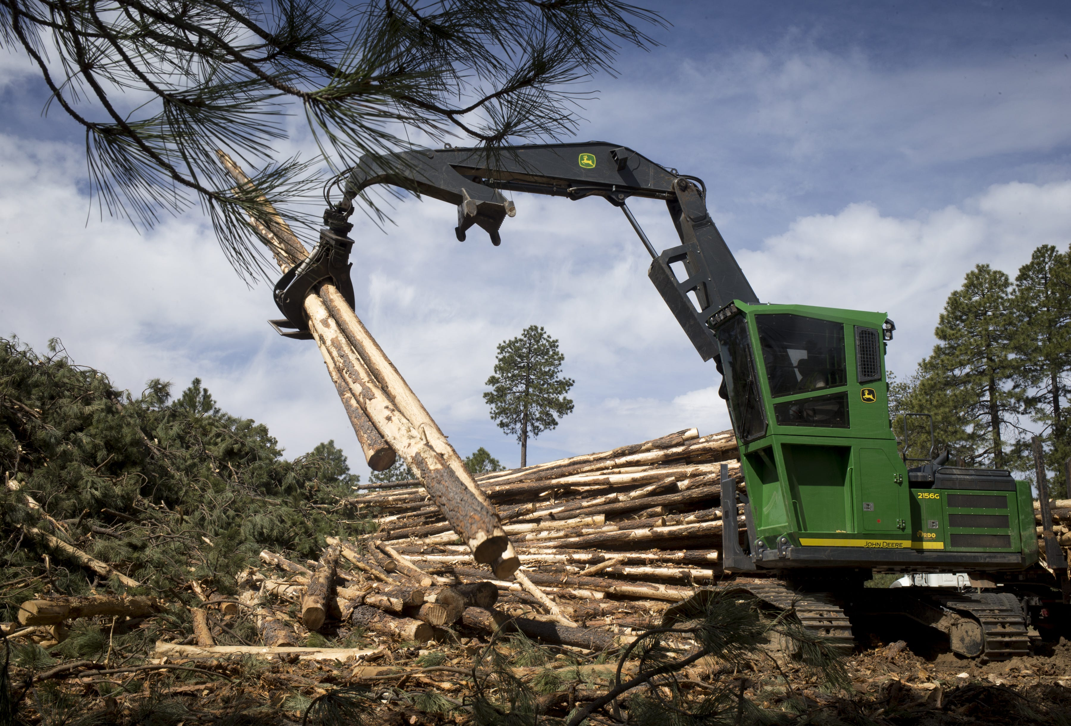 Tri Star Logging workers cut pines destined for sawmills or an adjacent biomass electric plant. Clearing patches to produce grassy meadows helps contain the spread of wildfires.