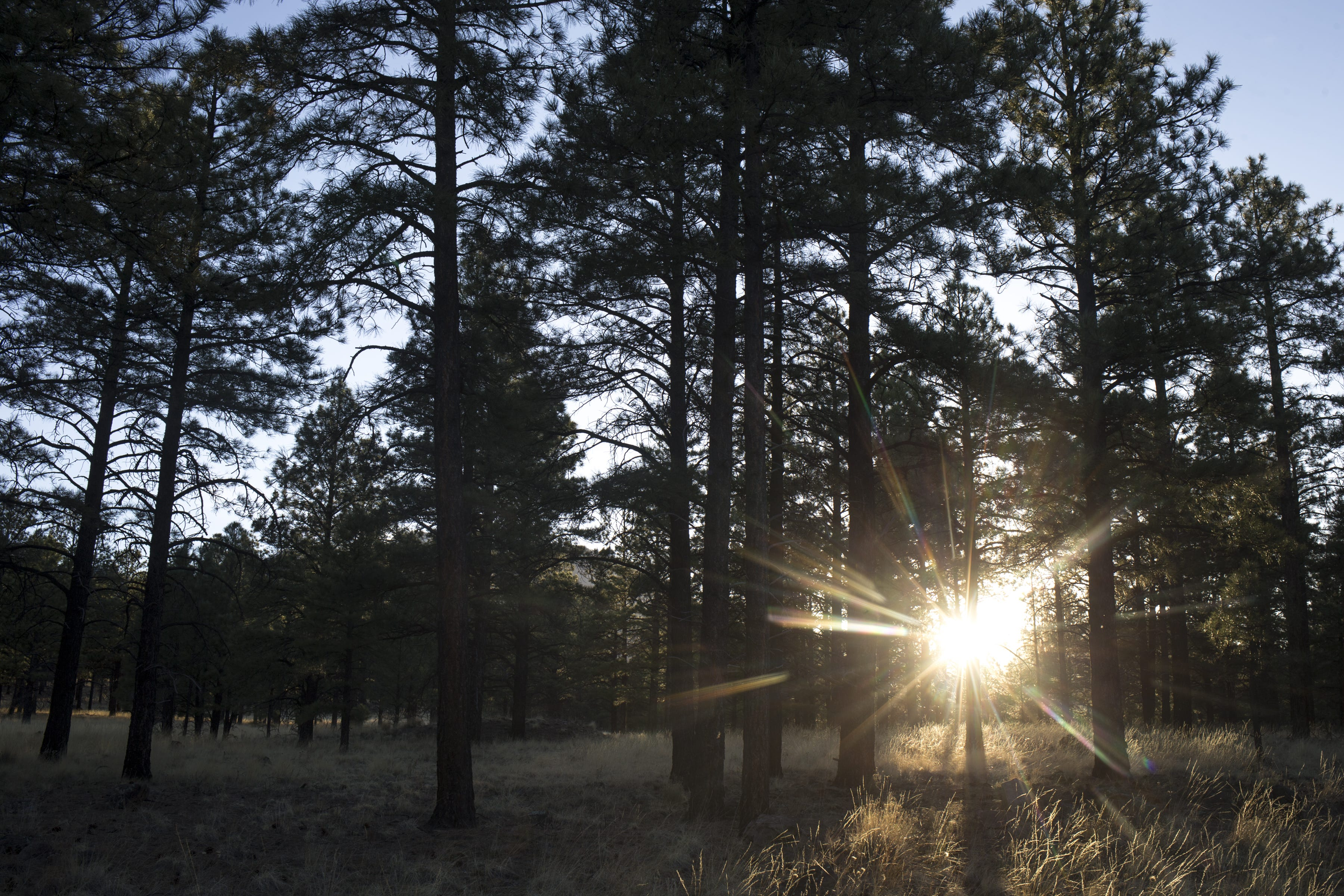 The sun sets on May 9, 2018, in the Coconino National Forest north of Flagstaff. The forest is one of four in Arizona that federal officials aim to restore.
