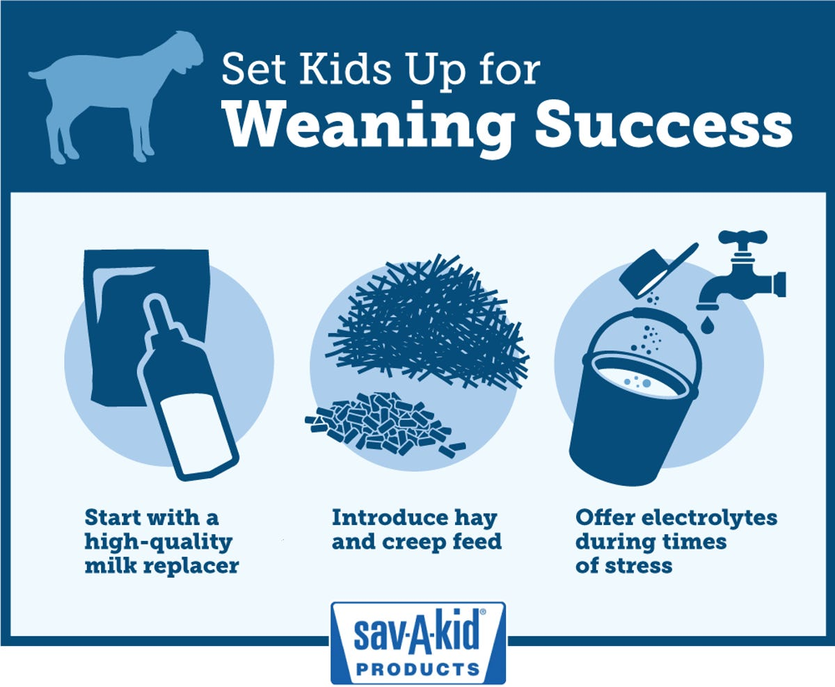 Six tips to make weaning less stressful for goat kids