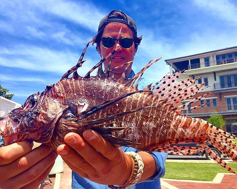 Lionfish in the Caribbean: Destructive menace, delicious dinner