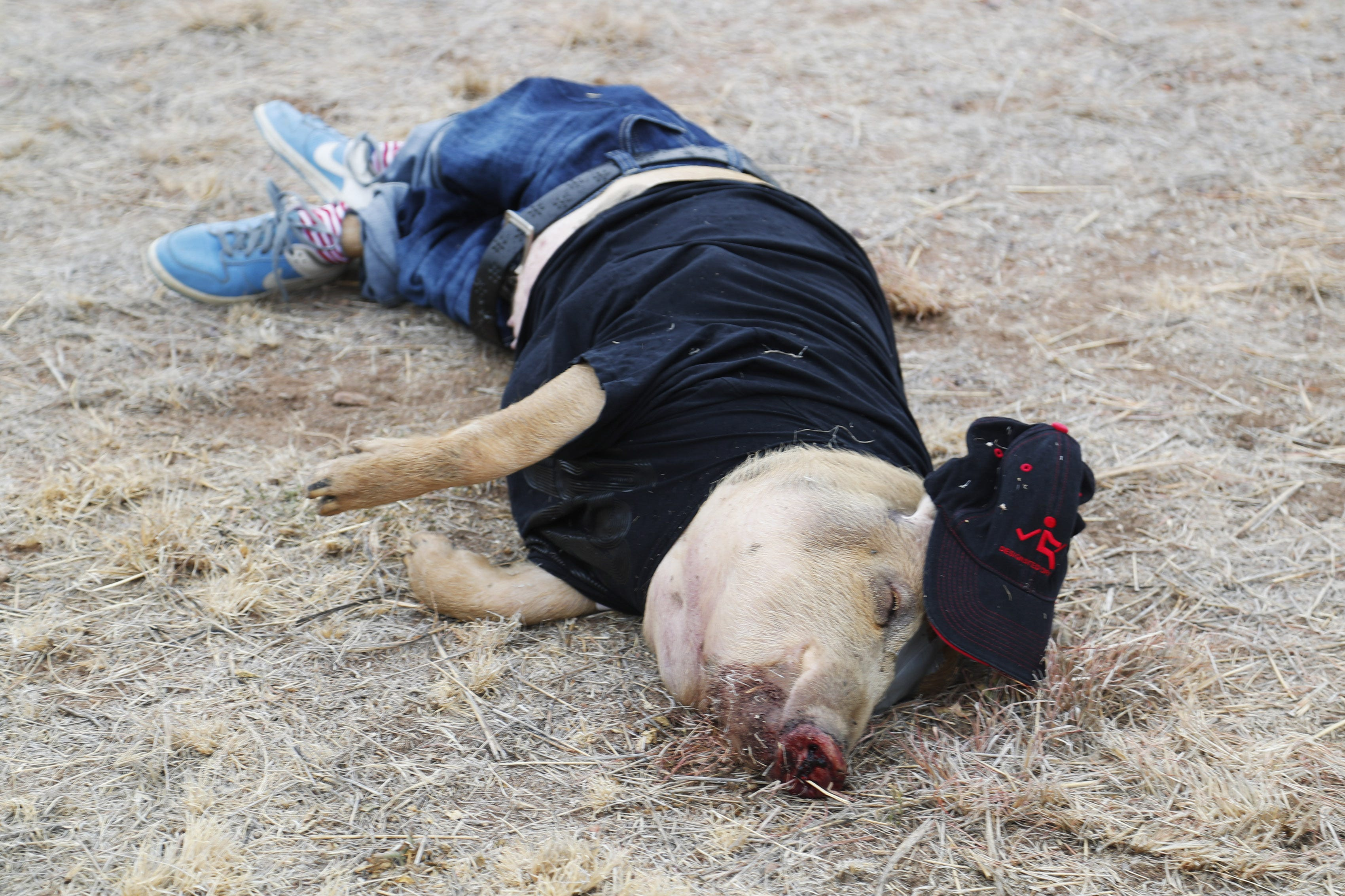 What dead pigs can teach us about missing migrant bodies in the desert