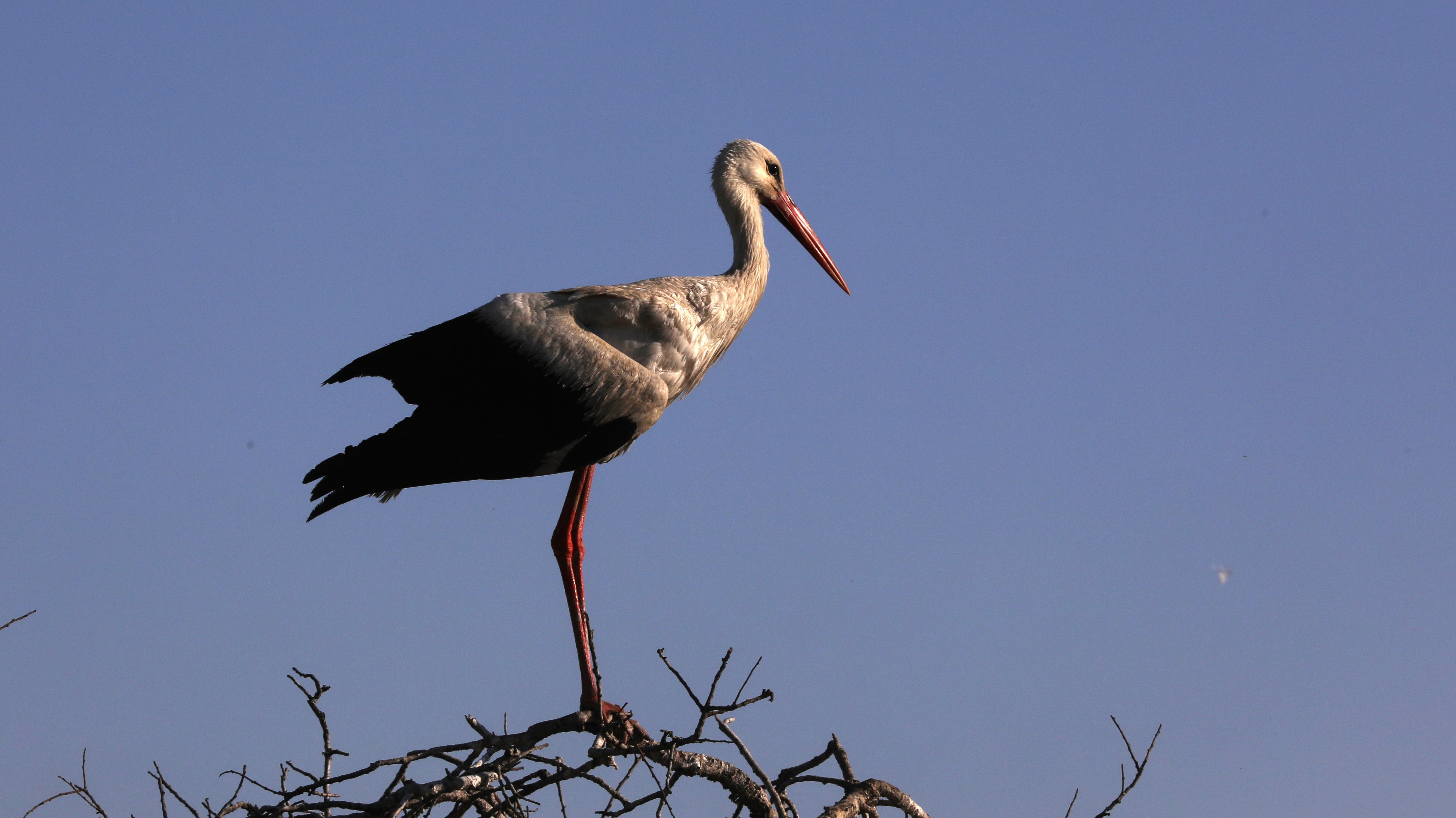 Stork flies off with tracker, charity gets $2,700 phone bill