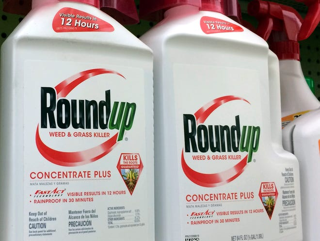 This file photo shows containers of Roundup, a weed killer made by Monsanto, on a shelf at a hardware store in Los Angeles.