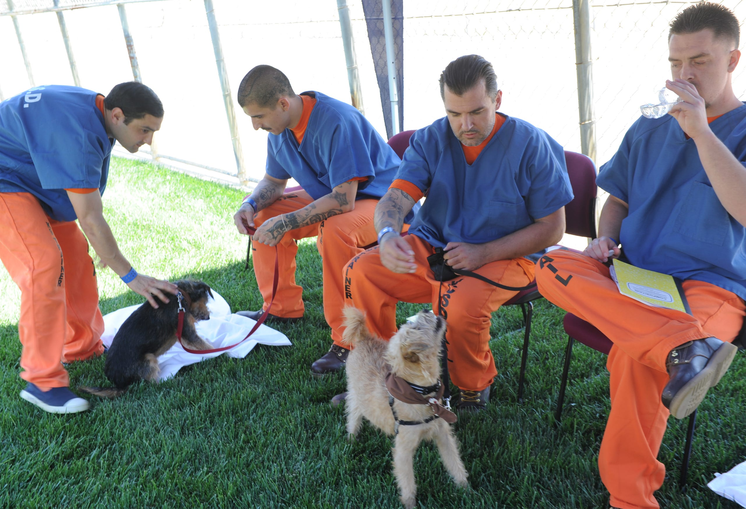 Therapy dogs trained by Ventura County inmates move on to
