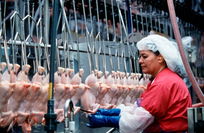 The Meat Institute says newly released data contradicts accusations against meat and poultry industry by animal ag activist groups.