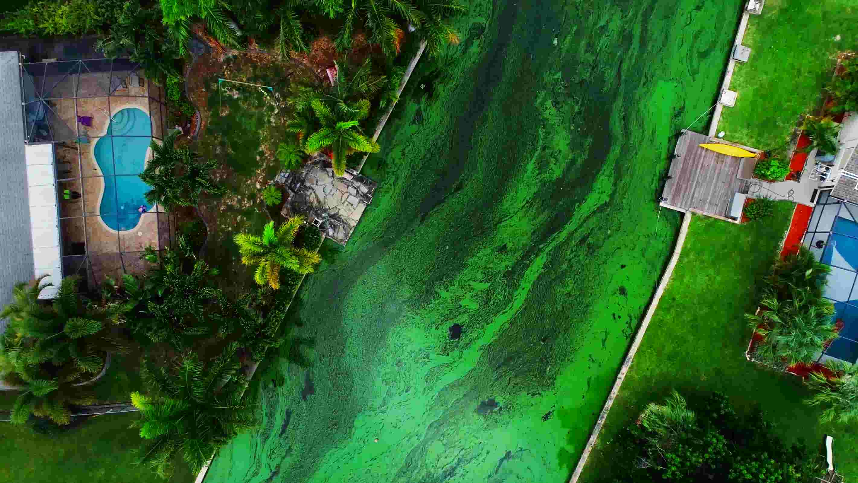 florida s algae crisis how is it affecting businesses