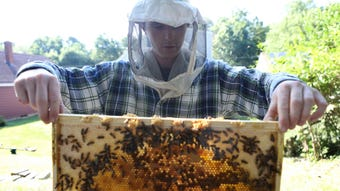 Pat Harrison, of Harbee Beekeeping, has a unique way to help bees thrive in suburban areas such as Verona.  July 10, 2018