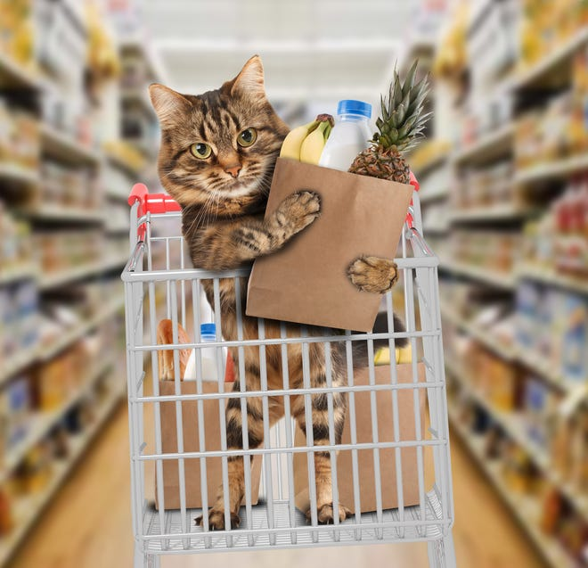 A cat food pantry launched by Aheville Cat Weirdos aims to help owners get the food, litter and medication their pets need.