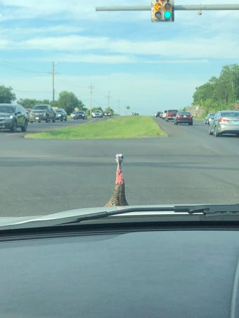A turkey is terrorizing (OK, maybe just irritating) the residents of Smyrna because it is impeding traffic