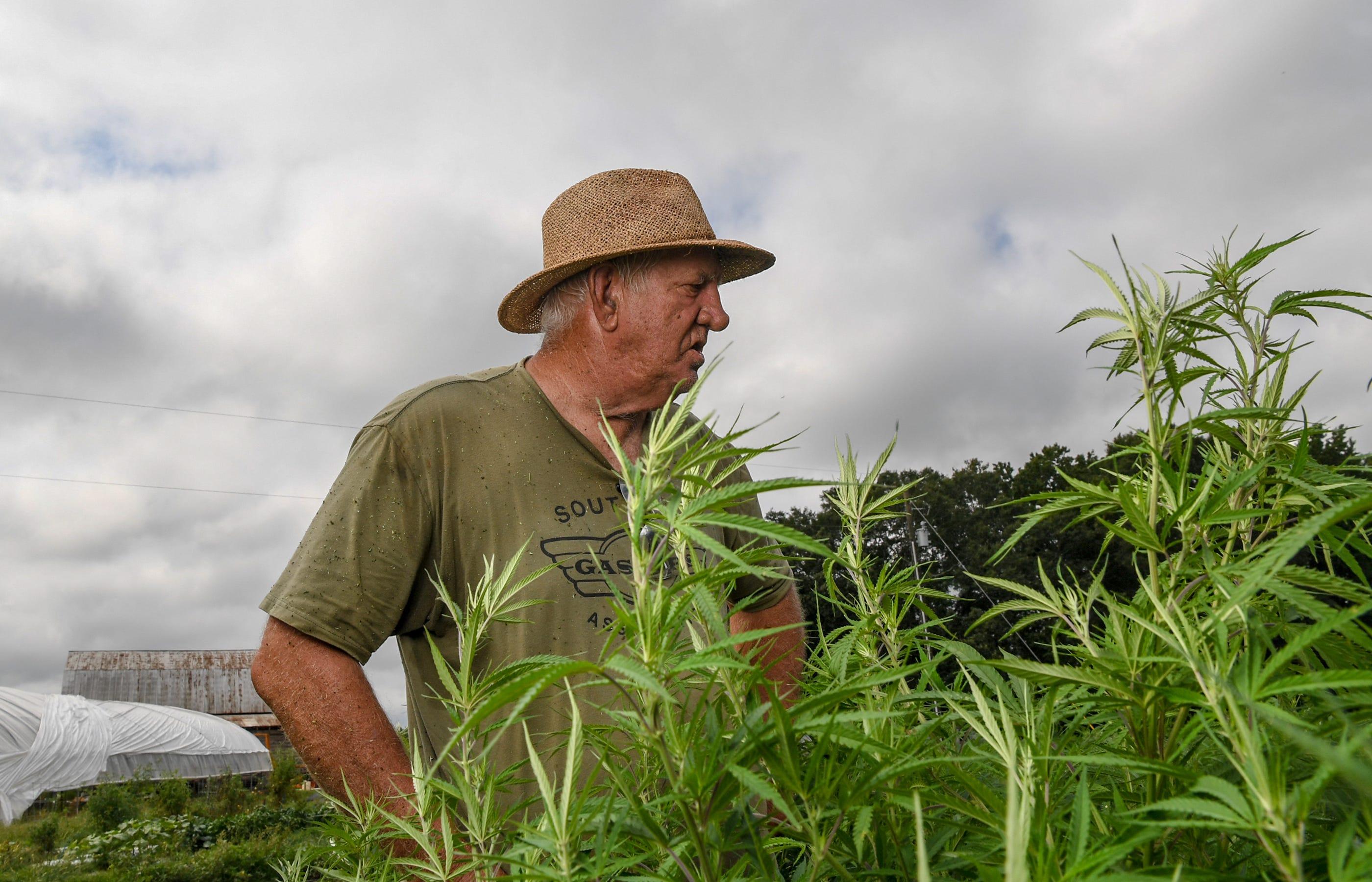 South Carolina farmers go all in for hemp despite industry's risks
