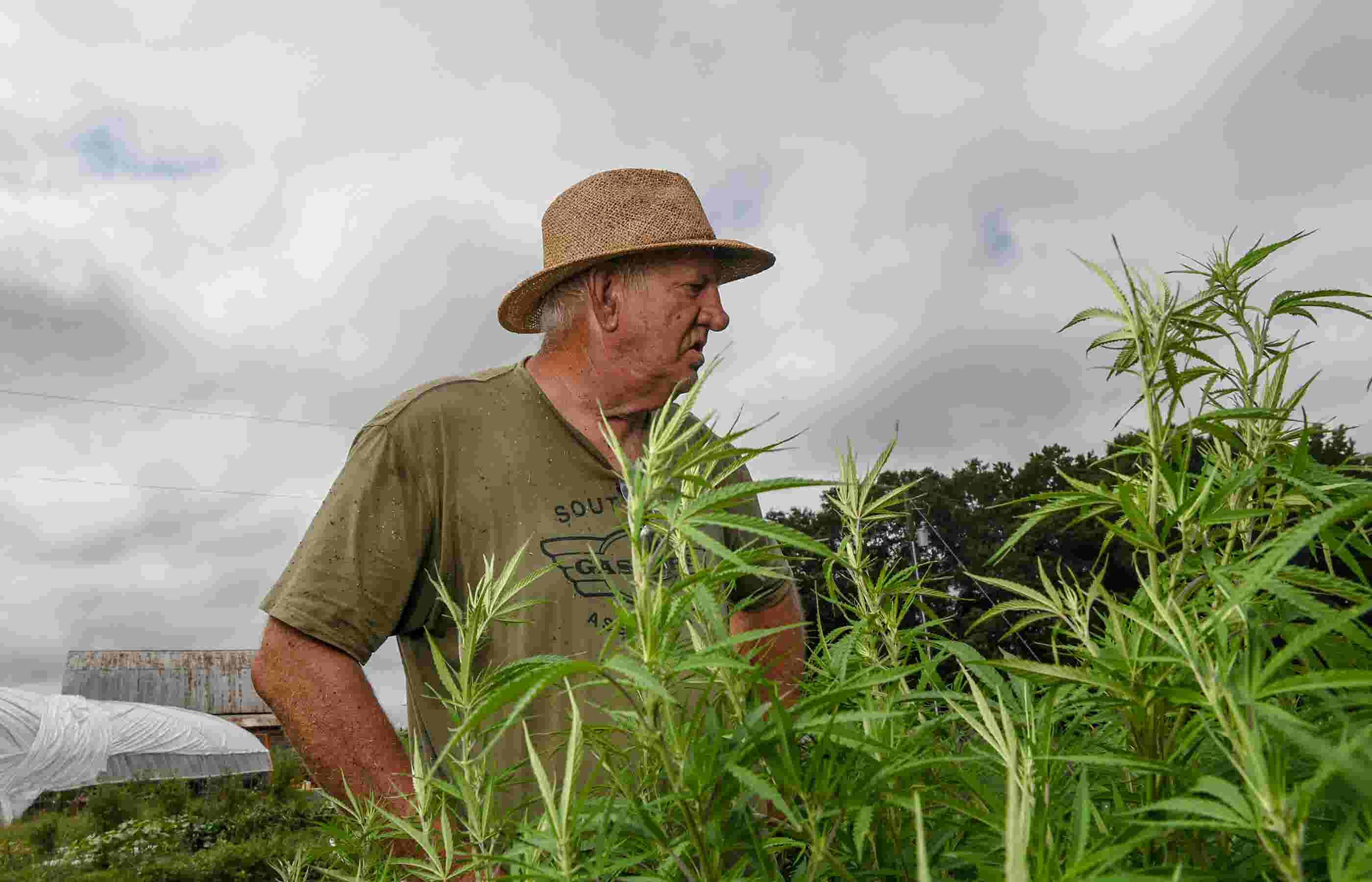 Inagural SC hemp crop challenges chosen former Clemson coach and farmer  Danny Ford f082f19ac32b