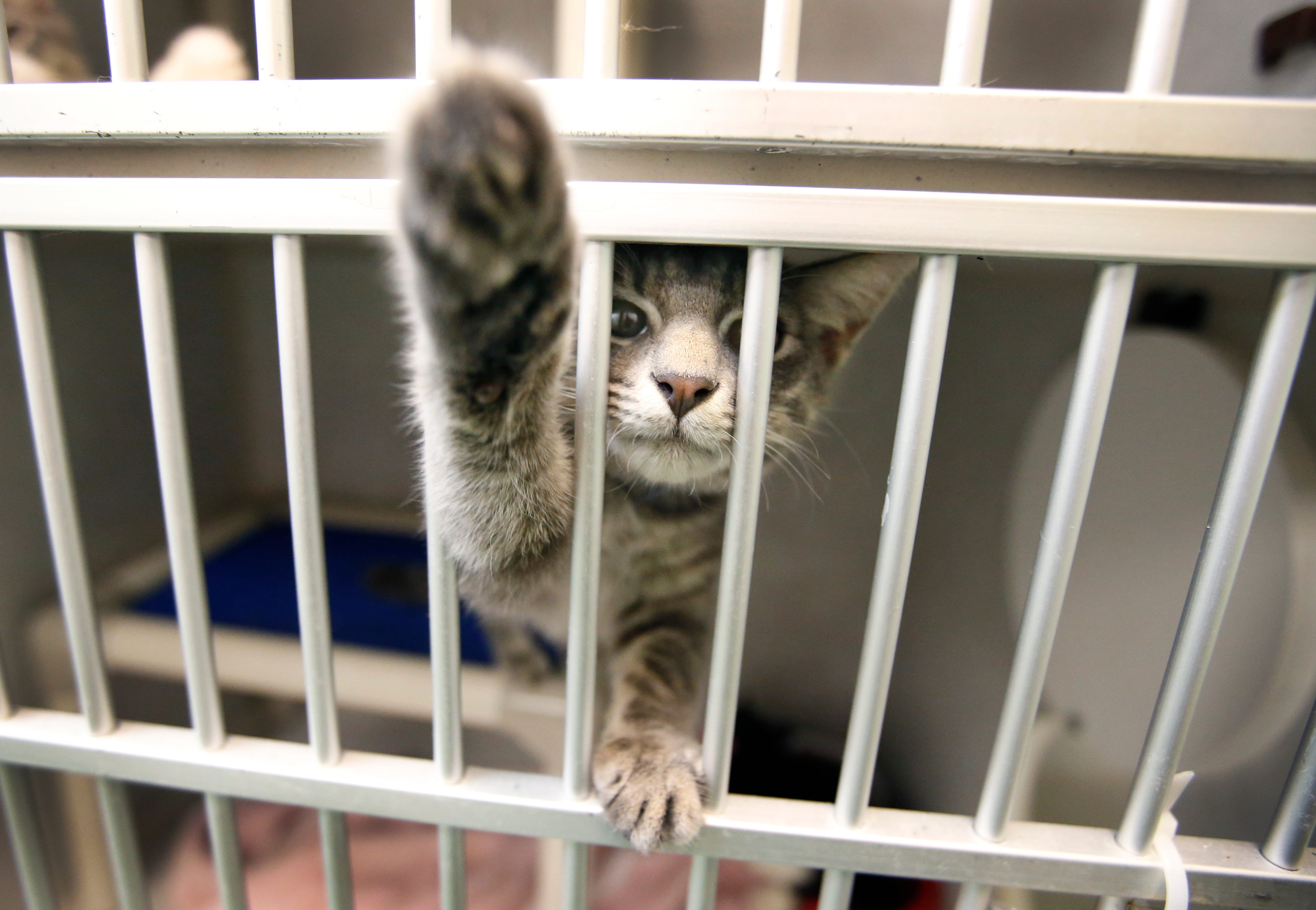 Free pet event big success at Rochester Animal Services