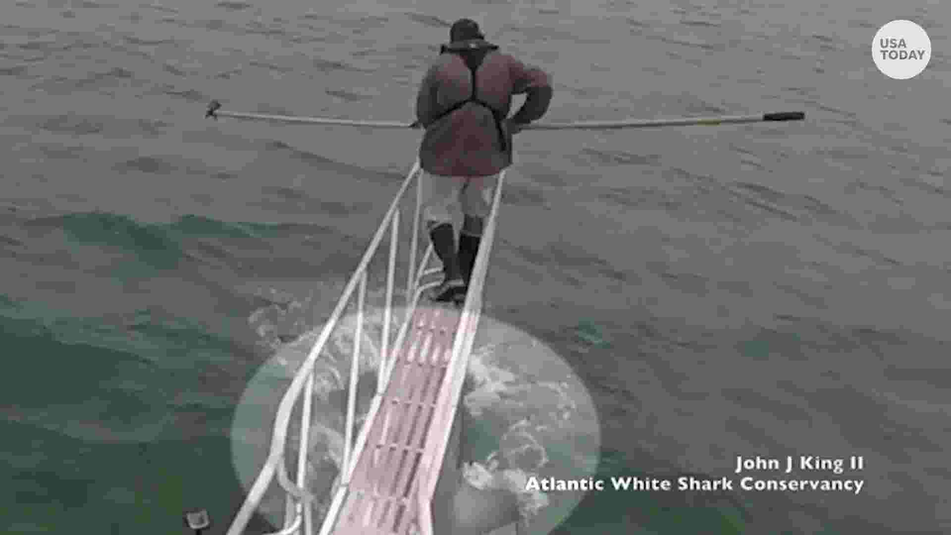White shark jumps out of water, heads for biologist\'s feet