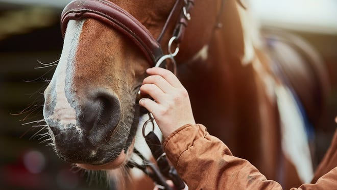 The Equine Disease Communication Center has confirmed 18 cases of a highly contagious disease in the state, including another one in St. Clair County.