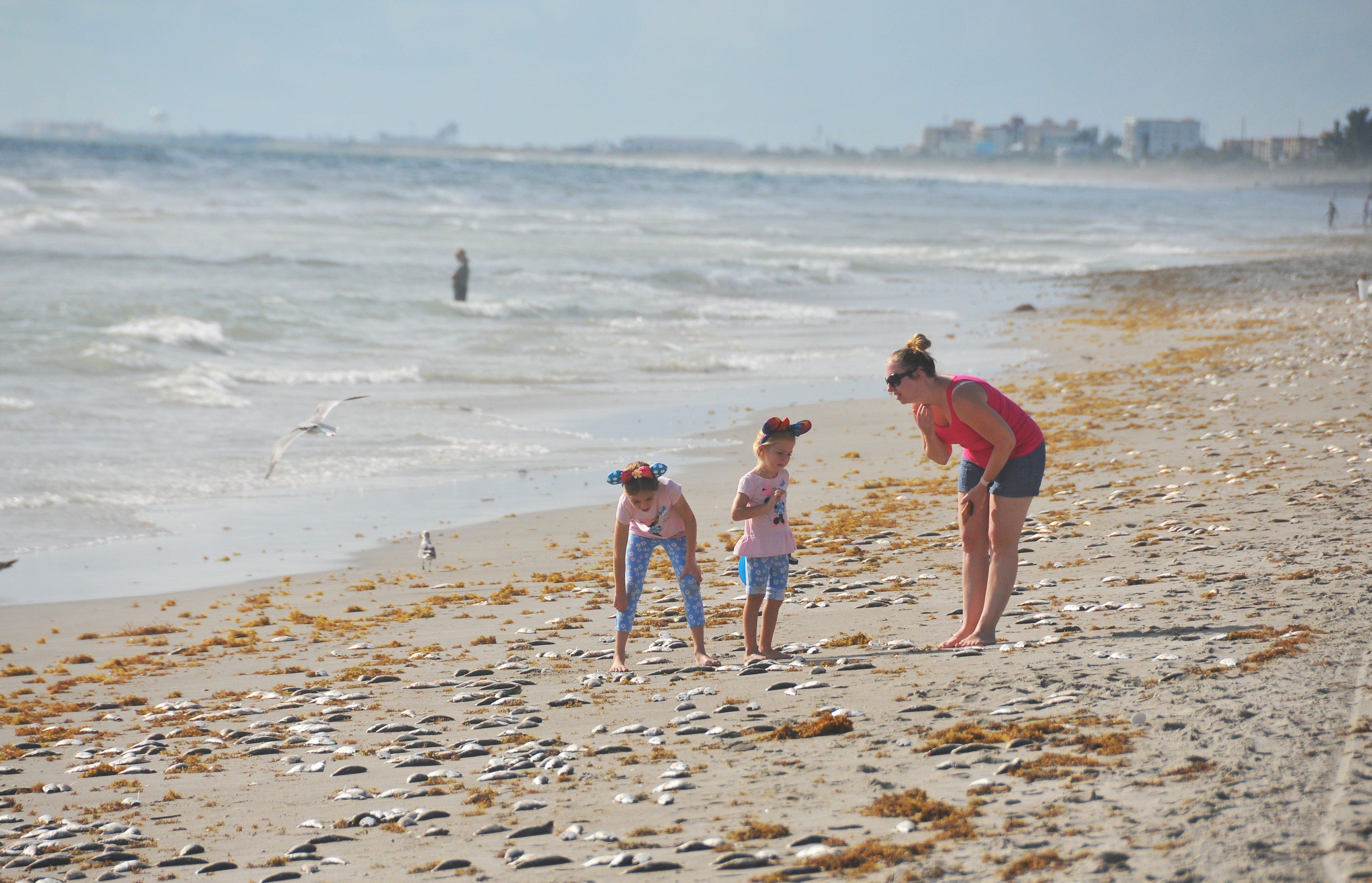 Imgenes De Tides In Cocoa Beach Florida