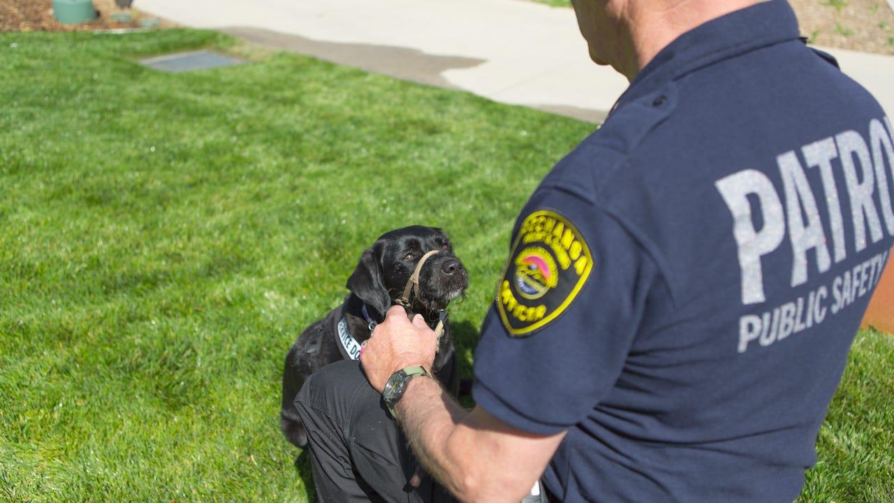 Veteran and service dog are perfect 6-legged team