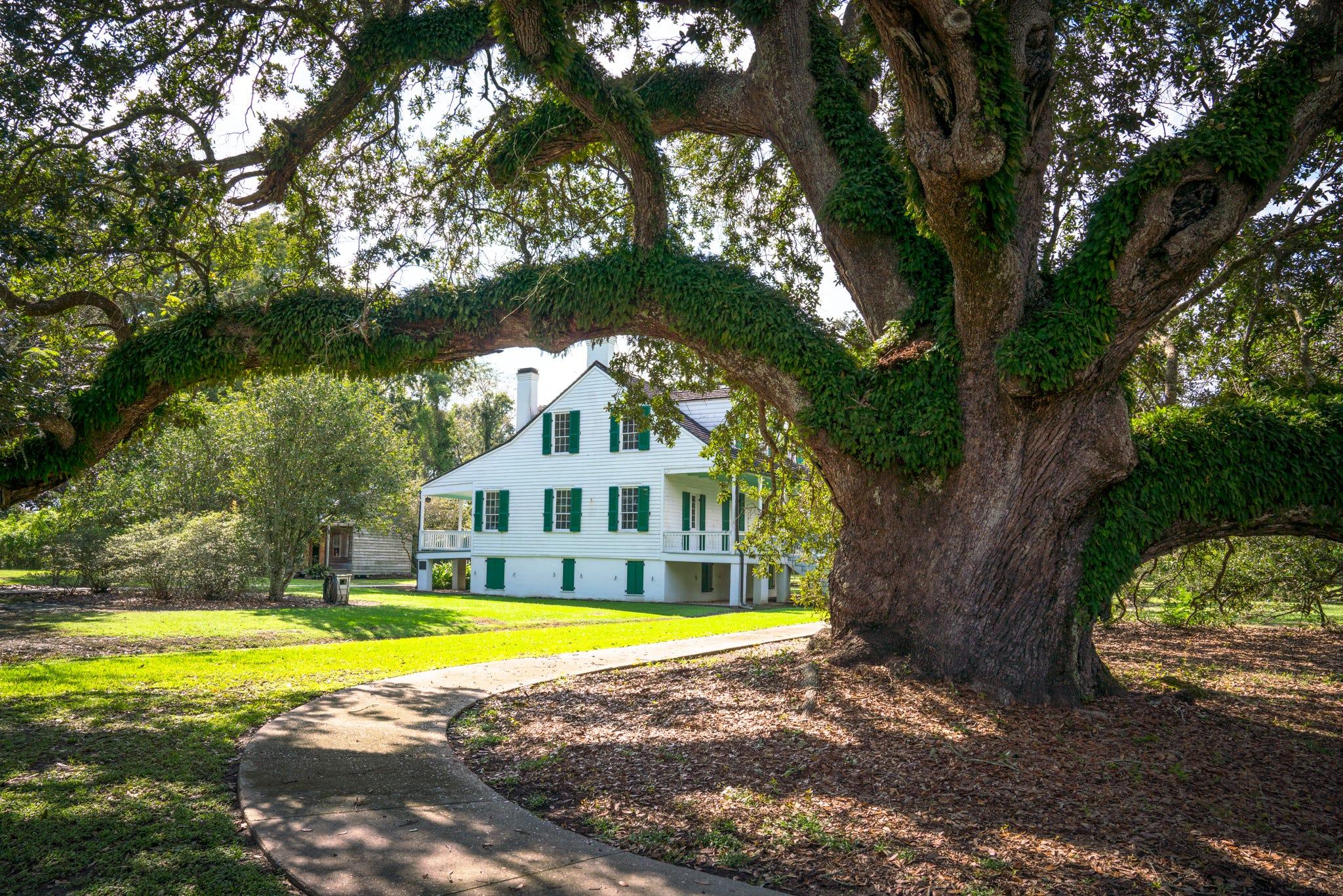 Here's why you need to visit Louisiana's Cajun Bayou | USA Today