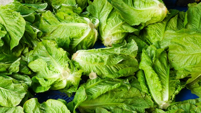 Florida agriculture commissioner Adam Putnam announced Tuesday that romaine grown in Florida is OK to eat.