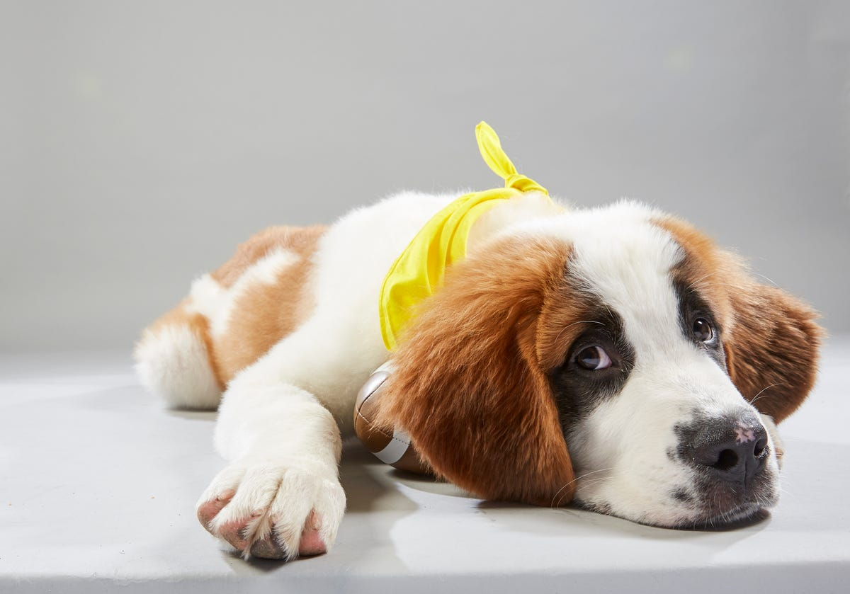 Meet the adorable Iowa dogs featured in Puppy Bowl 2019